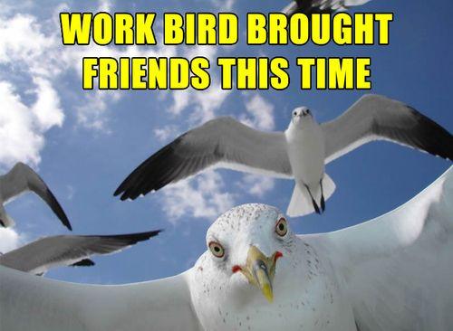 Workbird3